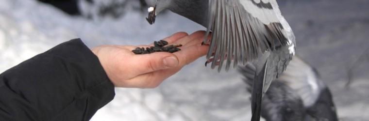 alimentaire-oiseau