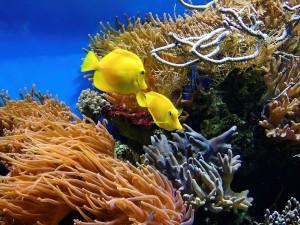 Quelques conseils pour bien choisir son aquarium